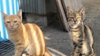 cats201009.jpg