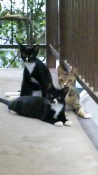 cats201009・2.jpg
